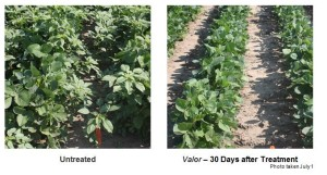Valent residual control