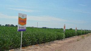 Credenz soybeans