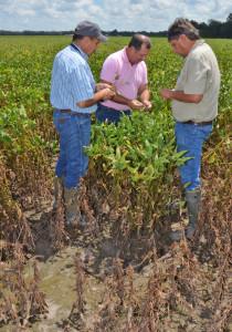 Stan DutileRon Levy and Richard Duhon in soybean field1jpg