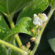 University of Arkansas Soybean Economic Notes, May 12, 2017