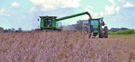 Louisiana soybean harvest