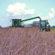 Louisiana Soybean Association launches 2017 yield contest