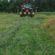 Webcast highlights cover crops' role in weed management