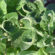 Arkansas Plant Board committee votes to ban all dicamba from April 15-Dec. 31, 2018