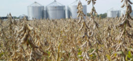 soybeans storage bins arkansas