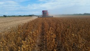 augustina soybean variety