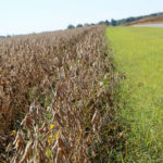 lonoke arkansas soybeans