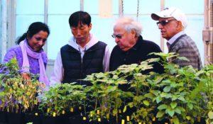 kansas state university pigweed researchers