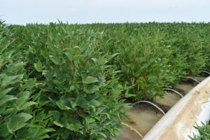 polypipe in soybeans