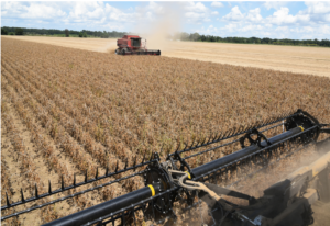 Louisiana soybean harvest