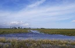 flooded soybeans after Hurricane Florence