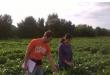 Clemson soybean research
