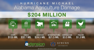Hurricane Michael damage graphic