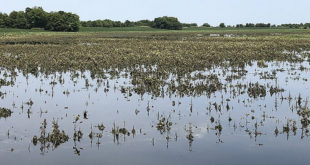 heavy rains on arkansas soybeans