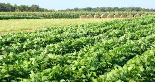 corn, soybeans, milo, hay, south carolina