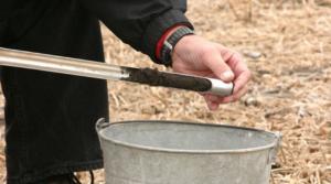 soil sampling for nematodes