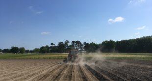 soybean planting