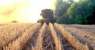 alabama soybeans