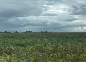 jackson county soybeans