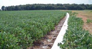 MIRI in soybeans