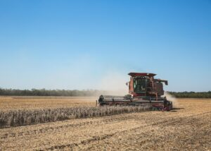 mississippi soybean harvest