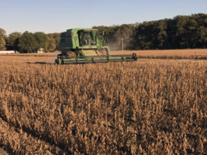 soybean harvest arkansas