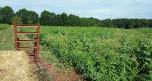 soil sampling clemson