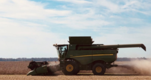 MSU soybean harvest