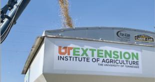 UT soybean trial results