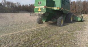 weed seed control