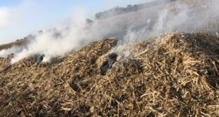 narrow windrow burning