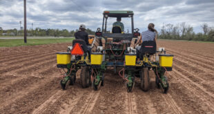 LSU AgCenter planting date trial